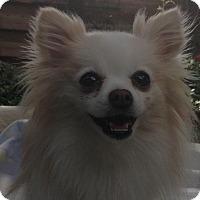Adopt A Pet :: Claire - Lodi, CA
