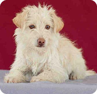 Craigslist Los Angeles Dog Adoption