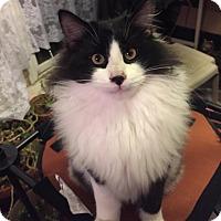Adopt A Pet :: AlejandroCP - Carlisle, PA