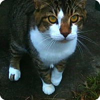 Adopt A Pet :: Fritz - Ocala, FL