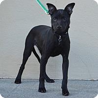 Adopt A Pet :: J is for: Jacob - Palo Alto, CA