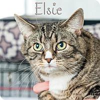 Adopt A Pet :: Elsie - Somerset, PA