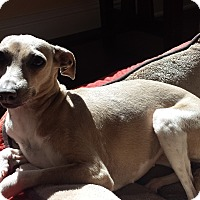 Adopt A Pet :: Trudy - SD - Costa Mesa, CA