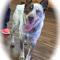 Adopt A Pet :: Darby - Anaheim, CA