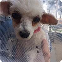 Adopt A Pet :: Athena - Encino, CA