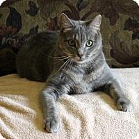 Adopt A Pet :: Billy Jo - Gaithersburg, MD