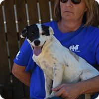 Adopt A Pet :: Skip - Groton, MA