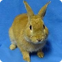 Adopt A Pet :: Franklin - Woburn, MA