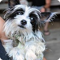 Adopt A Pet :: Frisco - Los Angeles, CA