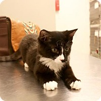 Adopt A Pet :: Apollo - Salem, MA