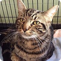 Adopt A Pet :: Fonzie - Breinigsville, PA