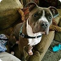 Adopt A Pet :: Oliver - Seattle, WA