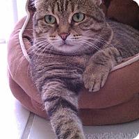 Adopt A Pet :: Chloe - West Palm Beach, FL