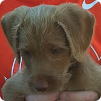 Adopt A Pet :: McGruff - Irmo, SC