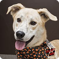 Adopt A Pet :: Chase - Troy, OH