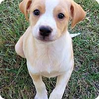 Adopt A Pet :: Leo - Wichita Falls, TX