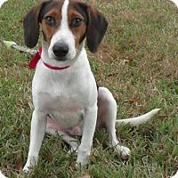 Adopt A Pet :: Jingo - Tampa, FL