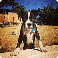 Adopt A Pet :: Tonka-ADOPT Me! - Redondo Beach, CA