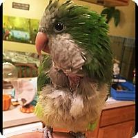 Adopt A Pet :: Mickey - Tampa, FL