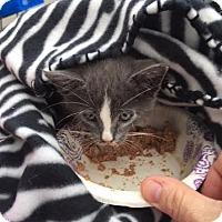 Adopt A Pet :: Sheldon - Columbus, OH