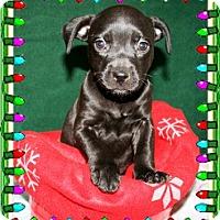 Adopt A Pet :: Wilma - Bradenton, FL