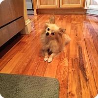 Adopt A Pet :: Peaches - Vacaville, CA