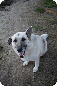 German Shepherd Dog Mix Dog for adoption in Ringoes, New Jersey - Cupcake