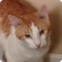 Adopt A Pet :: Buzz - Germantown, MD