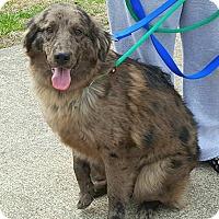 Adopt A Pet :: Taz - Sugar Grove, IL