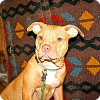 Adopt A Pet :: Janie - Chesapeake, VA