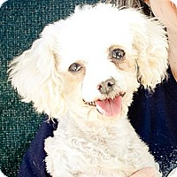 Adopt A Pet :: Ivory or Ivy - Acton, CA