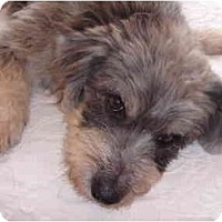 Adopt A Pet :: Rocky - Pending - Vancouver, BC