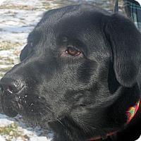 Adopt A Pet :: Duke - Jacksonville, FL