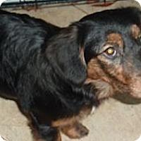 Adopt A Pet :: Marla - Raleigh, NC
