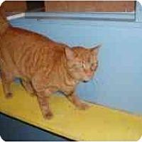 Adopt A Pet :: Henry - Hamburg, NY