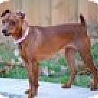 Adopt A Pet :: Freya - Nashville, TN