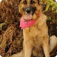Adopt A Pet :: Sadie - Laingsburg, MI