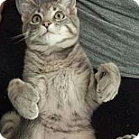 Adopt A Pet :: Dexter - Edmond, OK