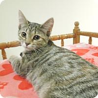 Adopt A Pet :: Espresso - Medina, OH