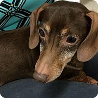 Adopt A Pet :: Cocoa - Homer, NY