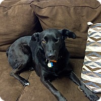 Adopt A Pet :: Hannah in CT - Manchester, CT