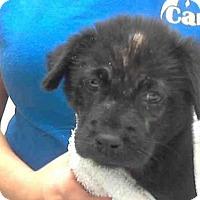 Adopt A Pet :: BRENDA - Conroe, TX