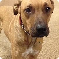 Adopt A Pet :: Babs - New York, NY