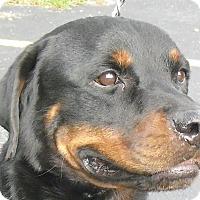 Adopt A Pet :: Rex - Seffner, FL