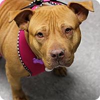 Adopt A Pet :: Rumba - Mount Laurel, NJ