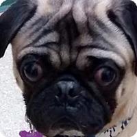 Adopt A Pet :: Kenshi - Pismo Beach, CA