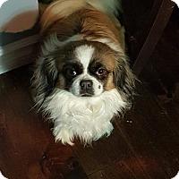 Adopt A Pet :: Molly - Edmonton, AB