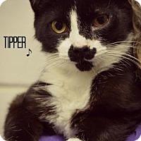 Adopt A Pet :: Tipper - Niagara Falls, NY