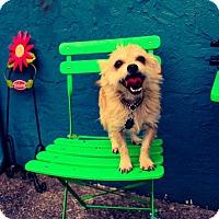 Adopt A Pet :: Mini - Eugene, OR