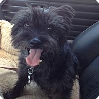 Adopt A Pet :: Winnie - Redondo Beach, CA